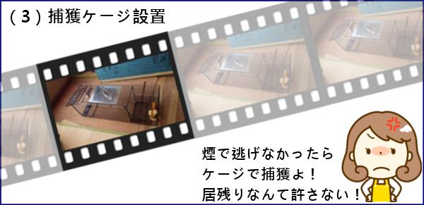 3_1捕獲ケージ