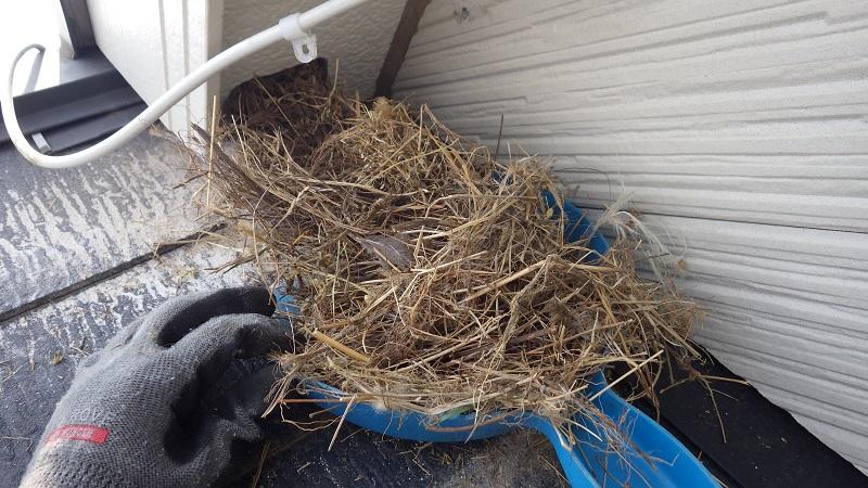 巣材がごっそり