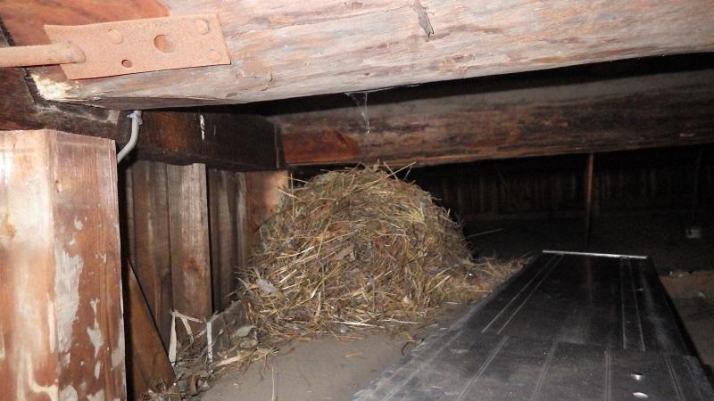 巣材のかたまり